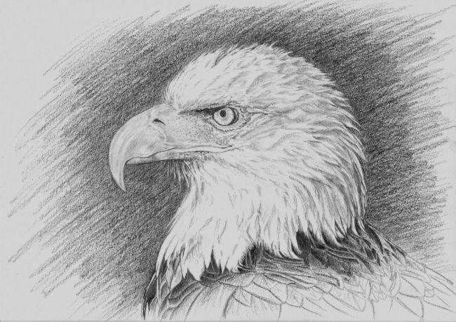 Aigles page 7 - Dessin de aigle ...