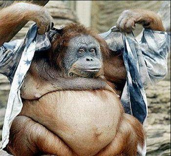 Singes gorilles - Petit singe rigolo ...